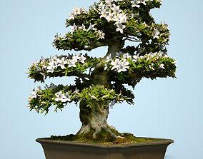 Satsuki Bonsai Tree Blossom 1 3D