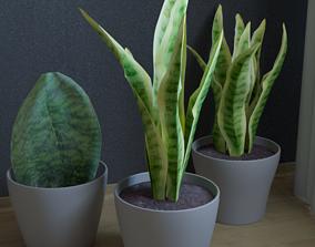 3D asset pot plant