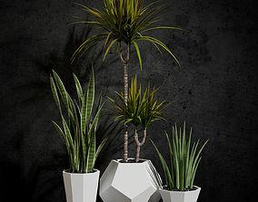 Room plants 3D