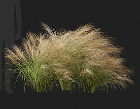 3D Nassella Tenuissima Mexican Feather Grass-06