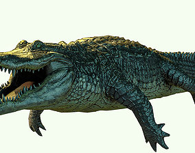3D model animated Alligator