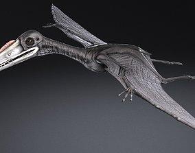 Pterodactylus 3D