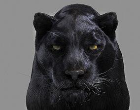 3D Panther black