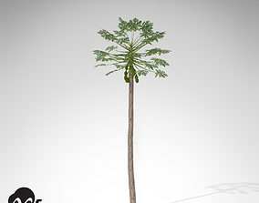 XfrogPlants Papaya 3D