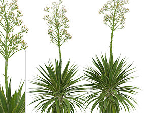 Set of Agave Angustifolia or Caribbean Agave 3D model 3