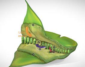 3D asset photosynthesis process