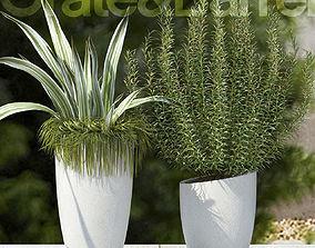 3D model Plants 65