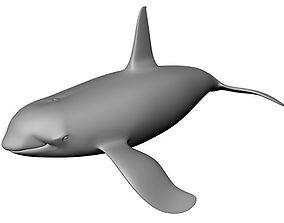 Orca 3D Model