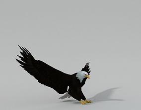 Bald Eagle 3D asset