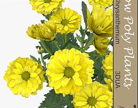 3D model Chrysanthemum