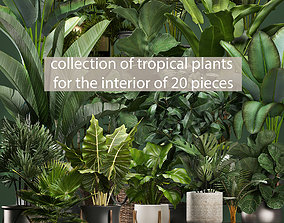 Collection of potted plants for the interior of 20 3D 1