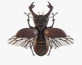 Licanus Cervus Stag Beetle 3D Model no Rig realtime