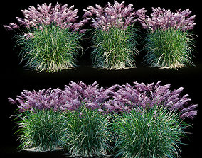 Miscanthus sinensis RED CHIEF 3D model