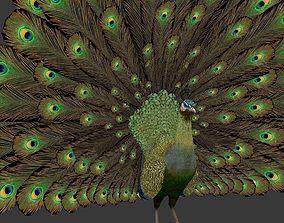green peacock 3D model