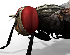 housefly 3d model insect