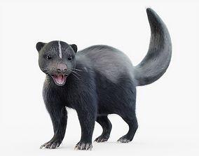 Skunk Rigged Fur 3D model