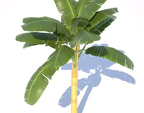 Banana Tree - 02 low poly 3D asset