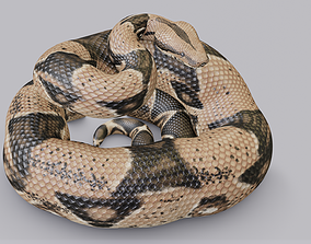 3D asset Rigged Boa Constrictor