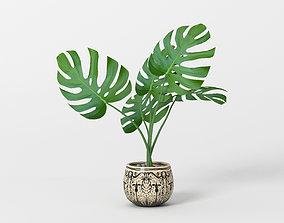 Monstera potted home flower 3D model