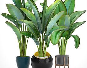 3D model Ravenala palm 4