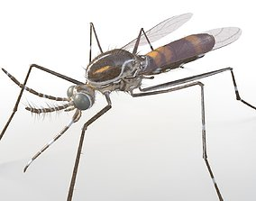 3D asset Mosquito Rigged Hairs
