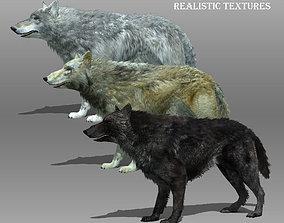 Wolf Animated 3D asset