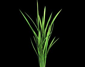 PADDY RICE GROW PLANTS 3D MODEL LOW POLY low-poly