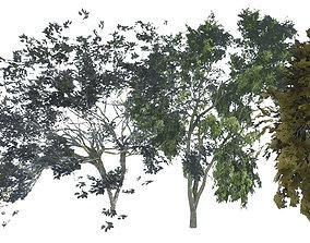 3D landscape Tree V 1