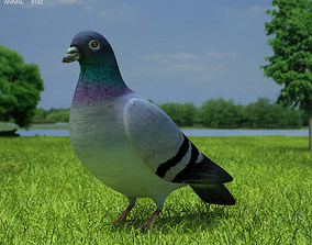 3D asset Rock Dove Columba Livia