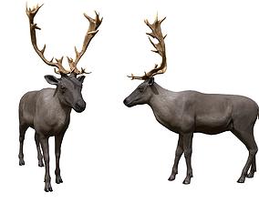 3D model animated Reindeer
