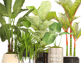 Collection plants 3D