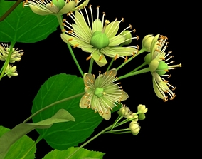 3D model Flower Tilia Cordata