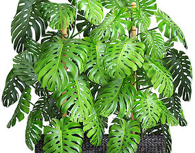 3D model Collection plants Monstera
