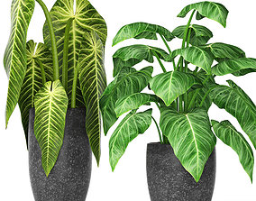 3D Plants collection modern