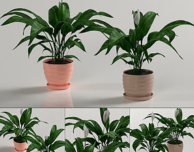 Indoor plants - Spathiphyllum 3D