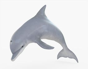 3D model Dolphin Rigged