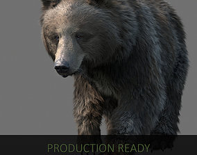 grizzly bear 3D animals