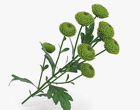 Santini Flower 3D