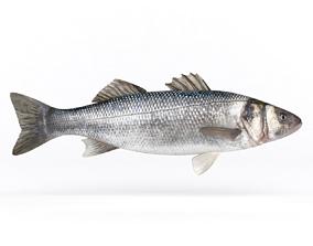3D model Seebass Fish