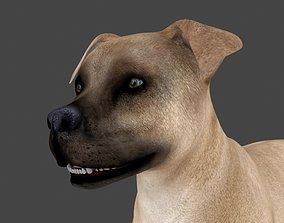 3D MPIT-020 Animated Dog