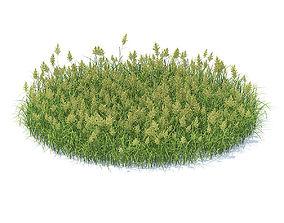 forest Flowering Grass 3D Model