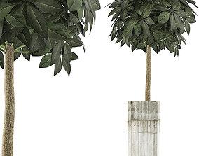 Plants Collection 65 3D
