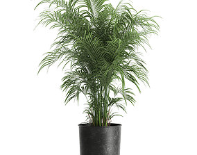 decorative palm in a Flowerpot for the interior 900 3D