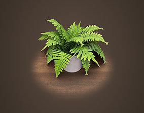 3D model Houseplant fern