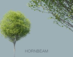 European Hornbeam Trees 3D model