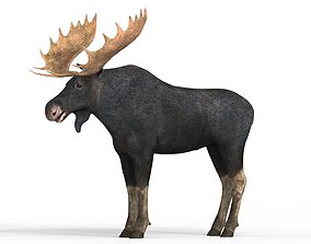 Realistic Moose With PBR Textures 3D asset