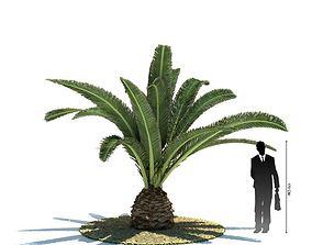 Palmtree Phoenix Canariensis 3D