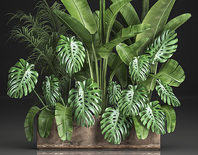 3D Houseplants in a flowerpot for the interior 937