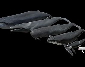 Cetaceans dolphins whales 3D model
