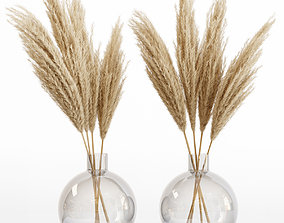Big dried flower pampas grass in glass vase 6 3D